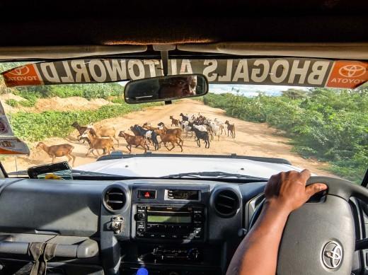 Fiebig Turkana-4425