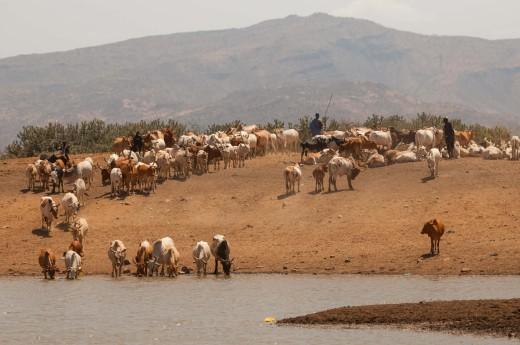 Fiebig Turkana-6158