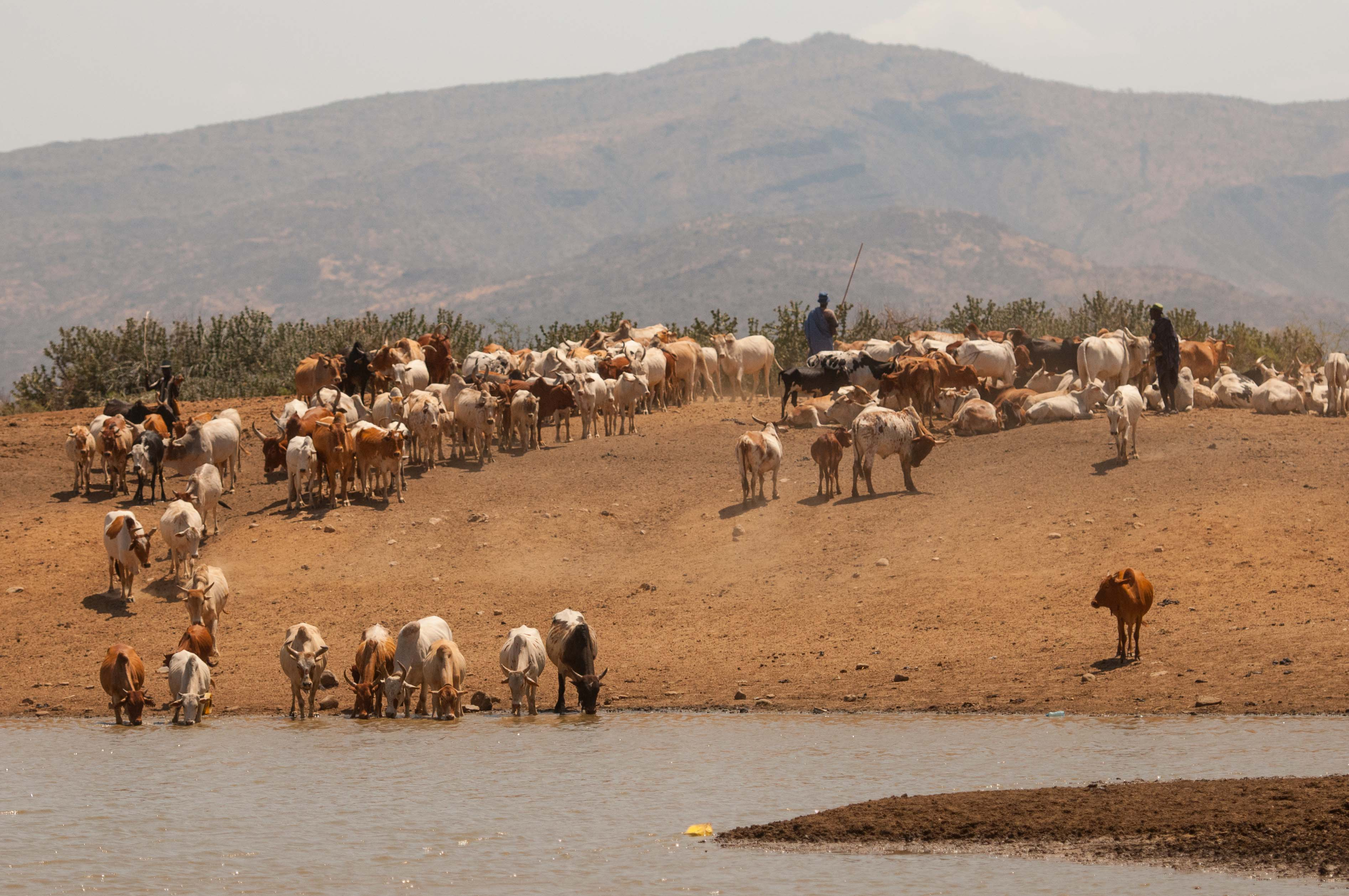 Encounter A Pastoralist World