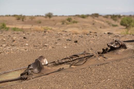 Fiebig Turkana-8554