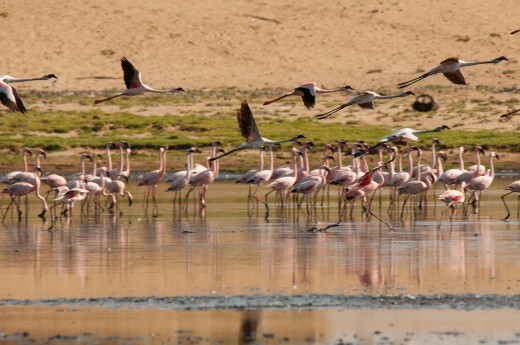 Fiebig Turkana-2025